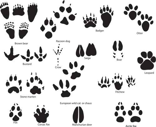 check-these-10-paw-print-tattoo-ideas-you-might-like-to-have-for-your-next-tat